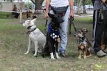 Твори добро: собаки помогли собрать деньги на лечение маленькой омички