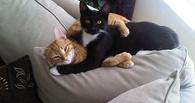 Для кошачьих амурных дел начал работать специальный «Дом свиданий»