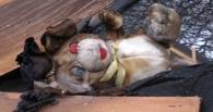 В Омской области на пожаре погибла 6-летняя девочка