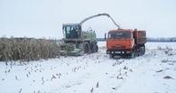 В Омске ушло под снег более 160 тысяч гектаров хлеба