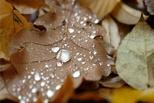 В Омске осень вступает в свои права: в выходные холодно и дожди