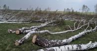 Омичи самовольно вырубили деревья на 4,7 млн рублей