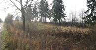 В Омске пропавшего студента нашли мертвым в лесу