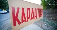 В Омской области ввели карантин по бешенству