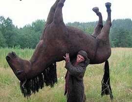 В Омской области конокрады похитили у фермера семерых лошадей