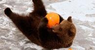 Большереченский зоопарк просит омичей к Новому году подарить животным игрушки