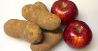 В Омской области прожиточный минимум снизился из-за дешевых яблок и картофеля