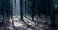 В Омской области мужчина четыре дня провел в лесу с переломами руки и ног