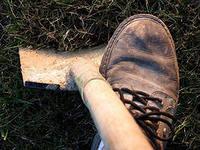 Под Омском полиция задержала дачника, который выкапывал сосны