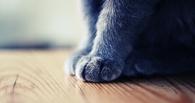 Омский чиновник хочет купить котенка по имени Омск у блогера Ильи Варламова