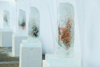 В Киеве открылась выставка замороженных цветов