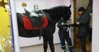 В Омске конь в кинотеатре стал поводом для полицейской проверки