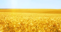 Казахстан перепродаёт омское зерно в Китай