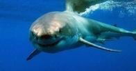 Несколько тысяч австралийцев протестуют против уничтожения акул
