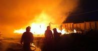 Директор питомника «Сибирский бастион»: Ни одно животное в пожаре не пострадало