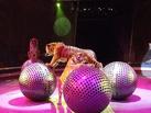 Елена Агафонова: Качественное цирковое представление омичи всегда оценят по достоинству