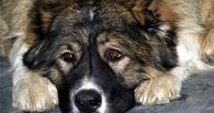 Омича оштрафовали на 40 000 рублей за убийство собаки