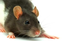 В Америке мыши съели изъятую полицейскими марихуану