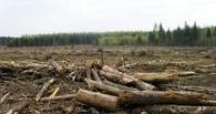 Омская прокуратура проверит вырубку леса в Чукреевке