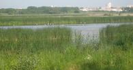 В птичьей гавани Омска высадят «резервные» саженцы