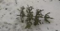 В Омске мужчину выбросили на помойку вместе с елкой