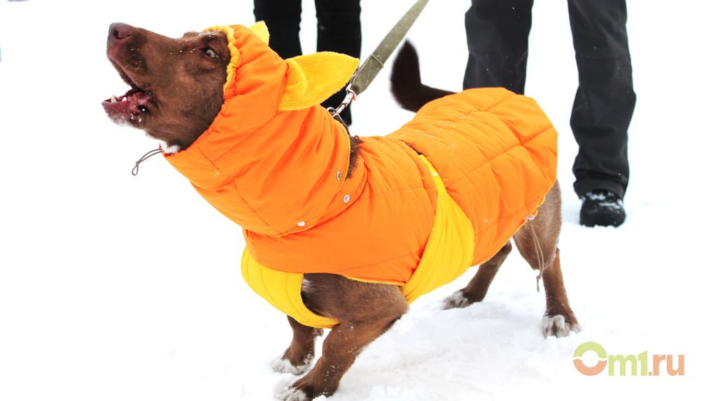 Мантии, платья и бабочки: в Омске прошел фестиваль желтых собак