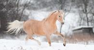 В Омске готовится открытие зимних скачек