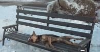 В центре Омска неизвестные «похоронили» собаку на лавочке