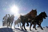 Как провести выходные в Омске: езда на собачьих упряжках или теплый плед?