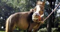 Омичка разбила голову, упав с лошади