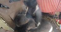 Большереченский зоопарк принял медвежат, оставшихся после убийства медведицы