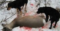 Браконьеры нанесли сотни тысяч ущерба животному миру Омской области