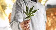 В Омске будет создан наркокластер