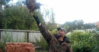 В Омске отдают в добрые руки хищную птицу с перебитым крылом