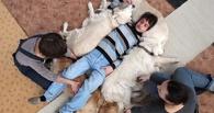 В Омске обученные собаки помогут больным детям