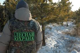 В Омской области за сутки зафиксировано 5 лесных пожаров