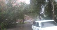 В Омске вечером сильный ветер повалил дерево в Нефтяниках