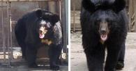 Еще 5 минуточек: в зоопарке Омской области медведица не может выйти из спячки