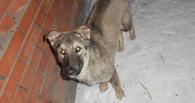 В Омске собака спасла от смерти выброшенного щенка