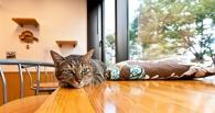 В Омске появится первое кафе с кошками