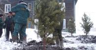 В Омске на улице Торговой началось восстановление зеленых насаждений