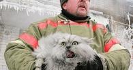 Из-под завалов после взрыва на Конезаводе спасли двух кошек