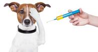 На Левом берегу Омска продолжается вакцинация животных