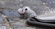 В Омской области 5-летняя девочка попала под машину