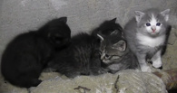 Омская история с замурованными в подвале котятами может достичь международных масштабов