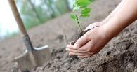 За озеленением Омска можно следить с помощью «зеленой карты»