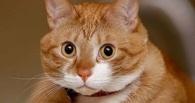 «Только отстрел». Австралийские власти убьют два миллиона котов, чтобы спасти крыс и кроликов