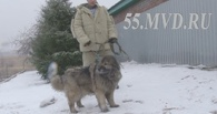 В Омске нашелся хозяин кавказской овчарки, напавшей на девушку