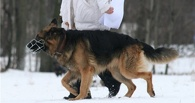 В Омской области собака Земфира нашла 18-летнего вора спутниковой антенны