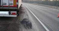 В Омской области фура задавила 23-летнего парня